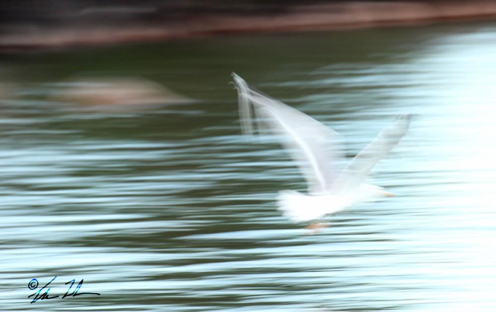 """Ibland känns livet likt denna oskarpa mås i sin flykt. Man """"flyger """" igenom livet nästan helt osynligt.."""