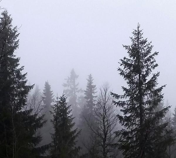 Sälendimman är likt livets dunkla framtid, ju längre man försöker titta, ju mer försvinner konturerna i det gråa diset.
